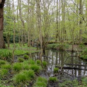 Besselsleigh Wood