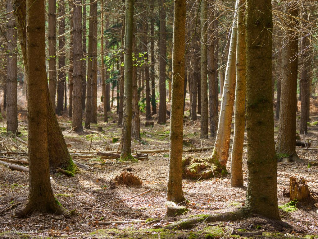 Badley Wood