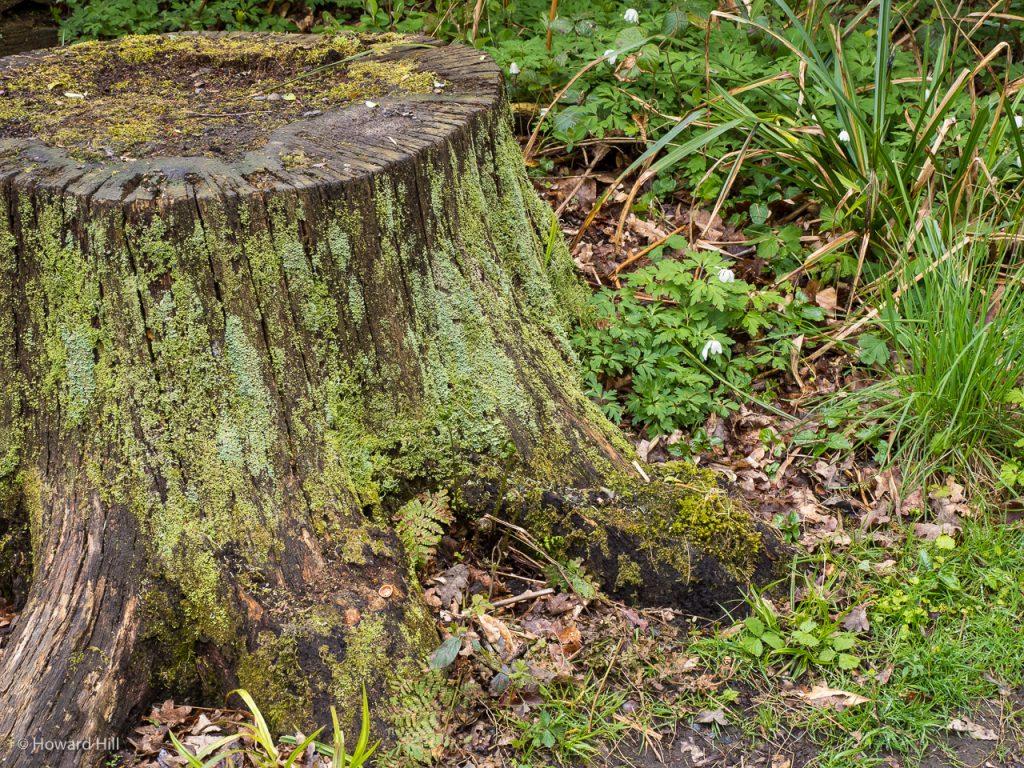 Besselsleigh Woods