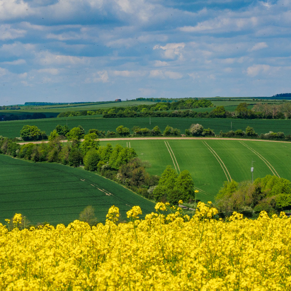 Our lovely countryside